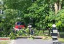 Powalone drzewo w Poniatowie