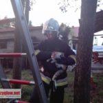 Kot na drzewie, czyli strażacy w akcji