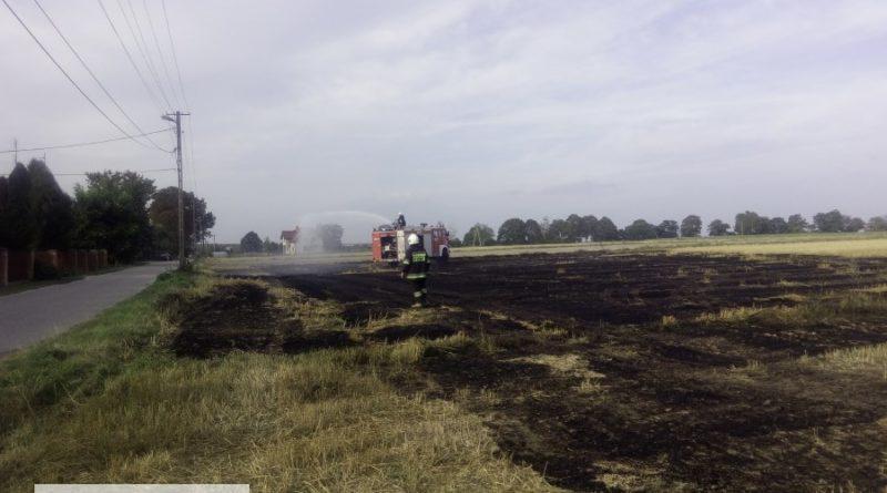 Dwa pożary oraz usunięcie gniazda szerszeni