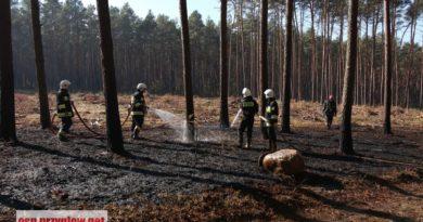 Kłudzice: pożar poszycia leśnego