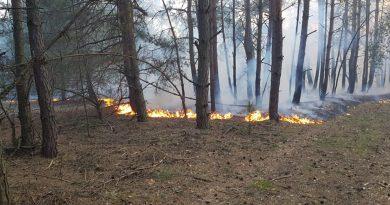 Podziękowanie dla OSP Przygłów za gaszenie pożaru w leśnictwie Myślibórz