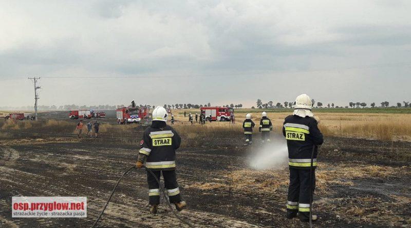 8 pożarów w powiecie piotrkowskim. W akcji brało udział 265 strażaków OSP i PSP!