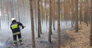 Najwyższy stopień zagrożenia pożarowego w lasach [FILM]