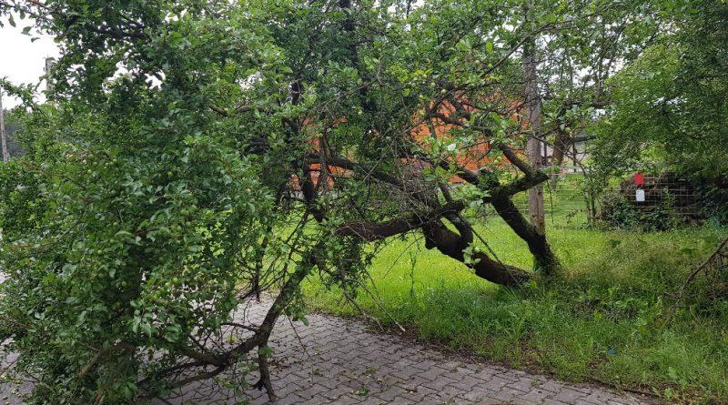#Interwencje: pochylone drzewa nad drogą wojewódzką nr 742 oraz usunięcie gniazda os